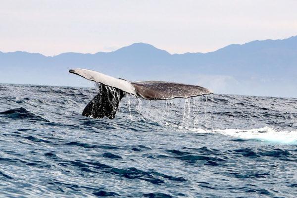 kaikoura-sperm-whale